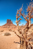 Tree and butte of Monument Valley