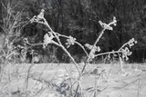 Beautiful winter landscape in clear weather. - 248696953