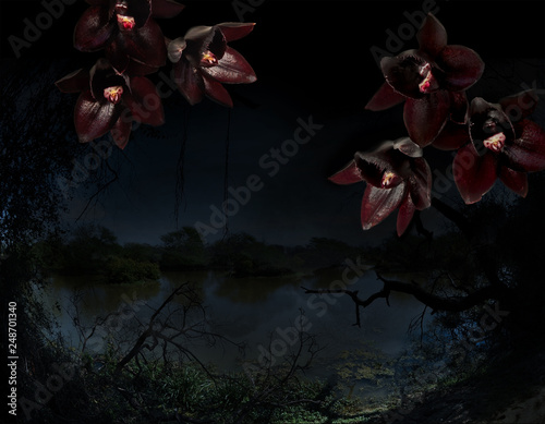Black orchids on a tropical jungle background