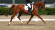 Horse dressage at trot during the limbo, photographed in the exam from the side.. - 248729782