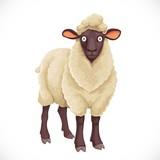 Cute dark cartoon  sheep with white  lush wool isolated on white background - 248743588
