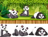 Panda in the wild - 248767181