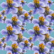 Pyrola . Seamless pattern texture of flowers. Floral background, photo collage - 248773510