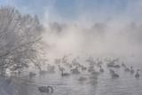 swans fog lake winter frost - 248790778