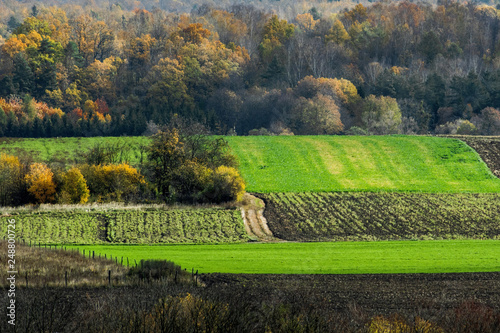 Foto Murales piękny jesienny krajobraz, pole i las