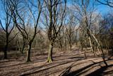 Fototapeta Na ścianę - Soleil d'hiver dans la forêt © f_chapolard
