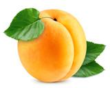 Apricot vector illustration