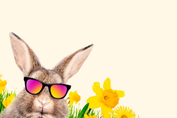 Hase mit Brille Comic Portrait Cool Lustig