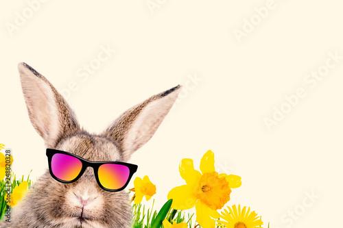 Hase mit Brille Comic Portrait Cool Lustig  - 248820328