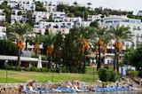 Beautiful marine panorama of Mediterranean sea summer nature with palm trees. Turkey sea travel background. - 248828136
