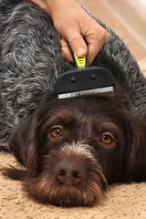 female hand with furminator takes care dog fur