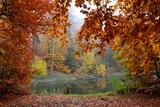Fototapeta Forest - piękna jesień w lesie, jezioro © FredanFoto