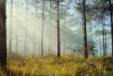 landscape of dreamy pine forest - 248840391