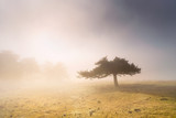 lonely tree with beautiful morning light - 248849714
