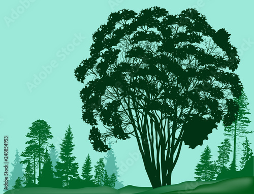 large tree on green forest background