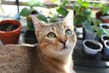 Cat relaxing. - 248855977