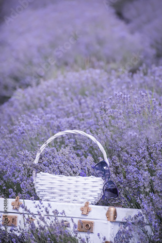 Vintage white suitcase and a white basket with lavender flo in a lavender field. - 248867301