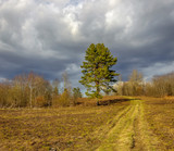 Lonely pine on the hill by the road in early spring. - 248870586