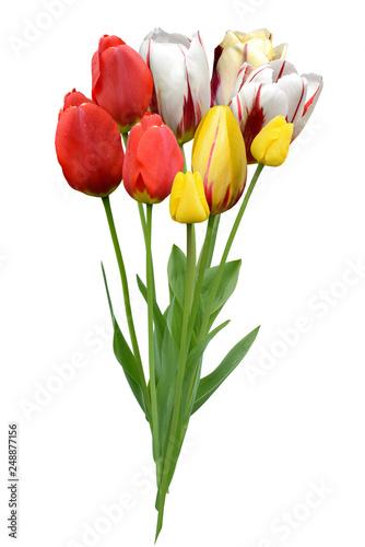 Blumen 1023