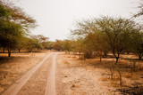 Sandy road. Wild life in Safari. Baobab and bush jungles in Senegal, Africa. Bandia Reserve. Hot, dry climate - 248923172