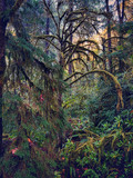 A mossy, rainy delicate green fairyland forest in western Oregon. - 248942301