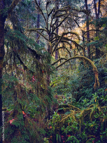 A mossy, rainy delicate green fairyland forest in western Oregon.