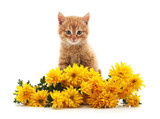 Little cat with yellow flowers.