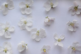 Gentle romantic floral pattern of white flowers of apple trees. Luxurious spring freshness.