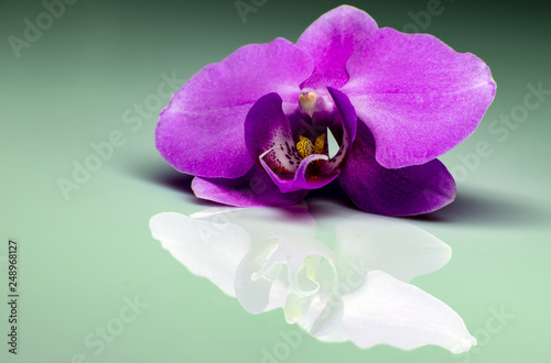 Orchid flower with a reflection. - 248968127