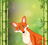 Fox on bamboo background