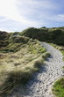 A sandy pathway leading the way to Wharariki Beach west of Cape Farewell, the northernmost point of the South Island of New Zealand. - 248973754