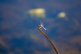 dragonfly on a stick\ - 248974301