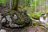 roots growind over a rock