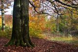 piękna jesień w lesie