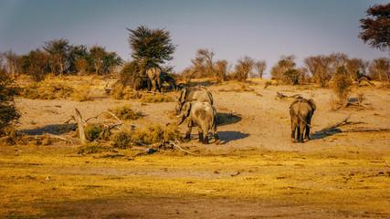 Elefanten entfernen sich vom Wasserloch in Richtung Busch,  Sonnenuntergang,  © Michael