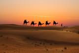 Camel caravan with tourists at sunset in Arabian Dessert - 249039782