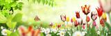 Blumen 1034