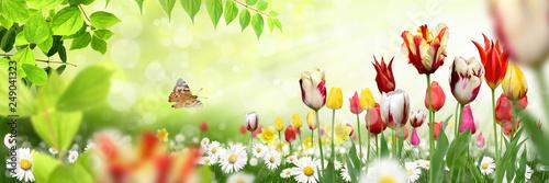 Blumen 1034 - 249041323