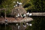 Natural life park, zoo, Izmir / Turkey, stork birds varietes animal