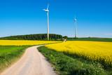 Ein Feldweg zwischen zwei Rapsfeldern im Frühling mit Windrädern im Hintergrund - 249067571