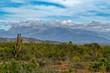 sierra de la laguna baja california sur