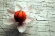 Basketball ft8104_3046 Pallacanestro Basket Basket-ball