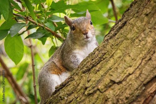 Eichhörnchen © alexgres