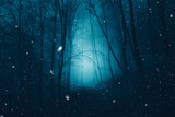 Fototapeta Las - Mystical dark blue foggy forest with snowflakes.  © robsonphoto