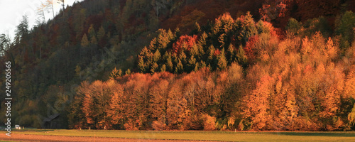 Forest Edge in Autumn - 249205565