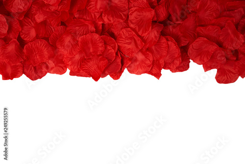 Foto Murales Fond page pétales de rose