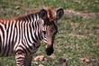 tanzania safari ngorongoro serengety