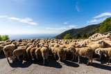 Mount Grappa in Italy / Sheep - 249342312