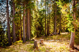 Spring forest panorama of Ukrainian Carpathians. Wonderful natural background.