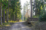 A dirt road in the forest - 249401571